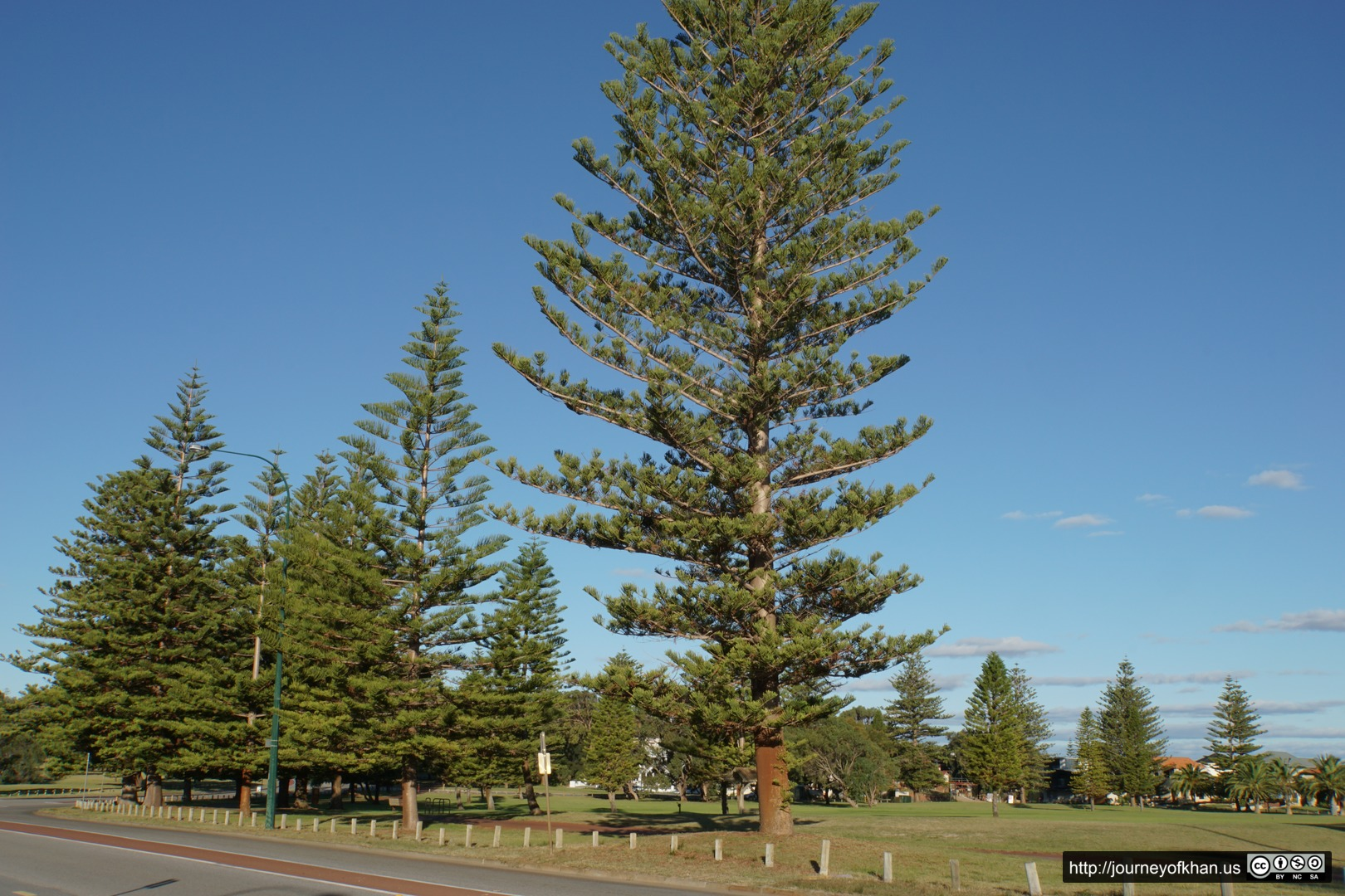 Tree next to a Road in Perth
