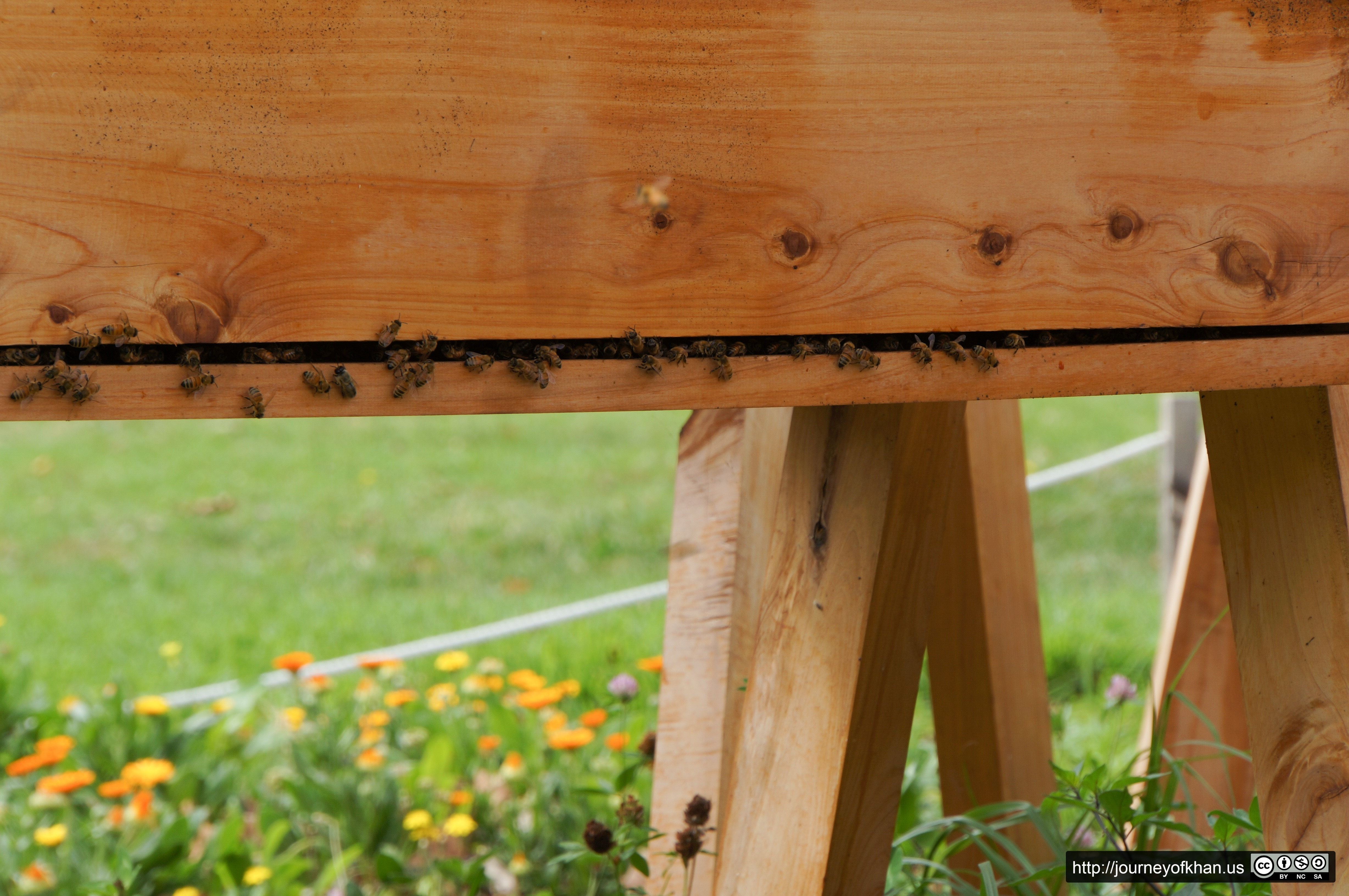 Bees in a Hive (High Resolution)