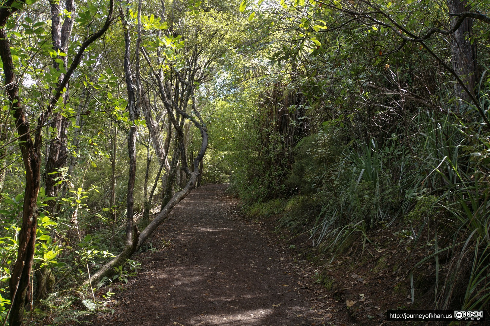 Dirt Trail on Rangitoto