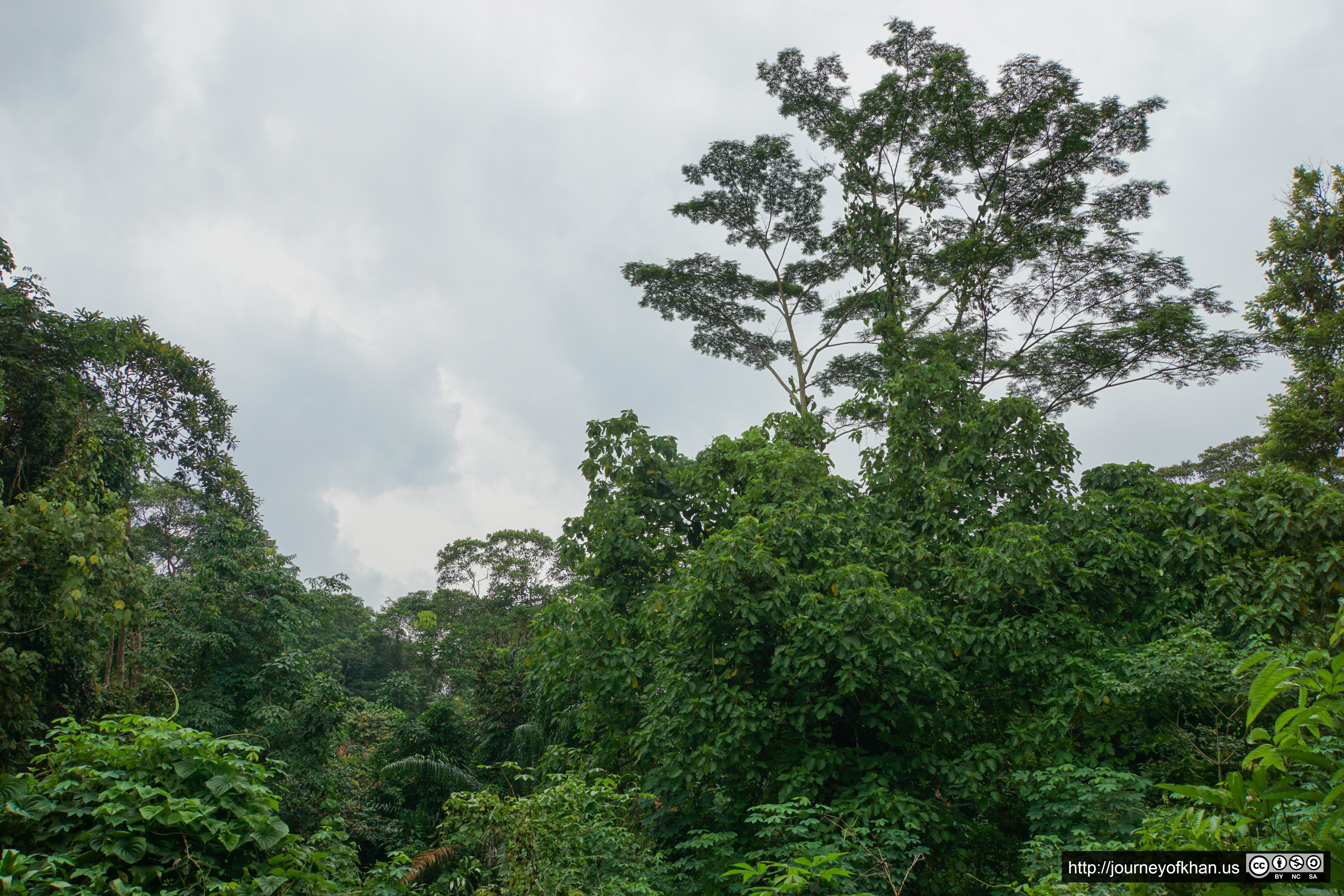 Trees in Singapore (High Resolution)
